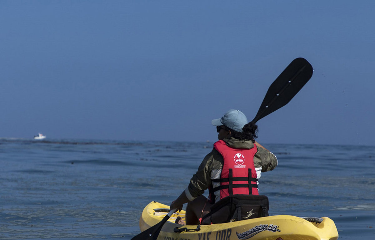 Become an independent Kayaker (Coastal)