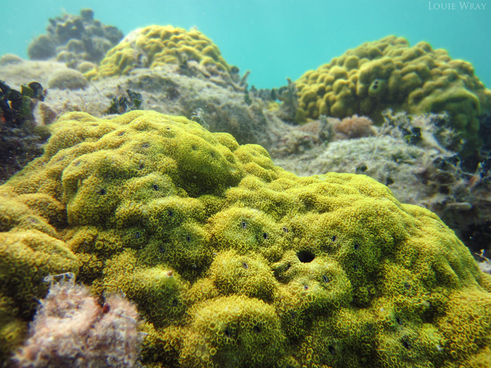 New Corals in Kovalam | Extreme Sports India